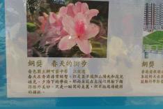 屯門盆蘭花展覽2016 園圃攝影比賽活動相片