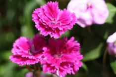 屯門盆景蘭花展覽2017園圃攝影比賽活動相片